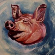głowa świni