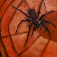 pająk 1